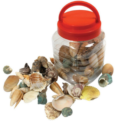 Bucket of Sea Shells,Imaginative play resources,sensory resources,sensory play resources,sensory toy resources